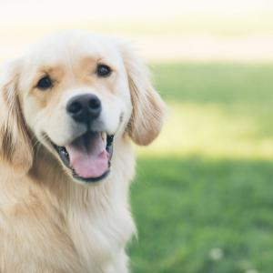 初心者でも簡単にできる【犬の手作りごはんの始め方】Lesson3