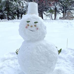 宮崎市もすごく寒いので前シーズン(2019-2020)と比べてどのくらい寒いのか気象庁の気温データを調べた