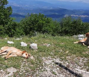 【イタリアのペット事情】夏のバカンス前に捨てられる犬達