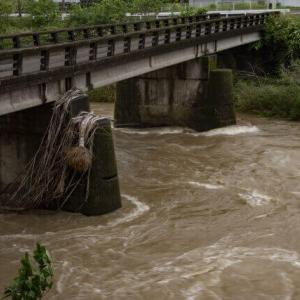 善福寺川のライブカメラや水位!現在の状況やツイッター情報
