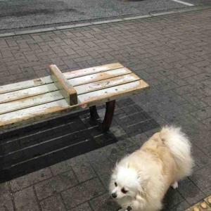 ベンチを見ると動かない犬