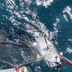 津軽海峡 黒マグロ釣り!2021.7.21