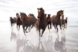 ゴールドシップ、憎めないあいつを育成してみて|有馬記念までの栄光がかすむ!出遅れ癖の真相とは?