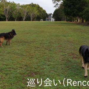 ~Part 10 (巡り会い); Guard Dog-Sitting in AUS (Rencounter)!!~ 大型ガードドッグのお世話係 / オーストラリア