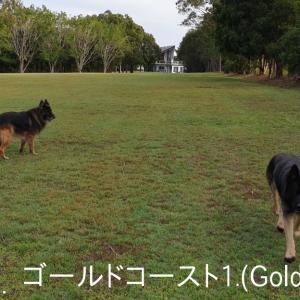 ~Part 6 (ゴールドコースト1); Guard Dog-Sitting in AUS (GC-1) !!~ 大型ガードドッグのお世話係 / オーストラリア