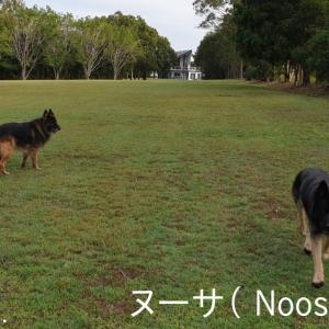 ~Part 5 (ヌーサ); Guard Dog-Sitting in AUS (Noosa)!!~ 大型ガードドッグのお世話係 / オーストラリア