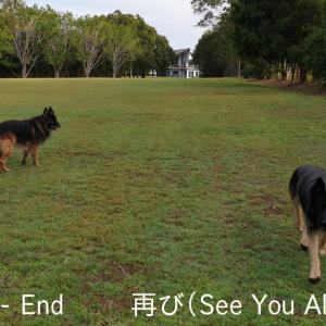 ~Part 13E. (再び); Guard Dog-Sitting in AUS (See You All Again)!!~ 大型ガードドッグのお世話係 / オーストラリア