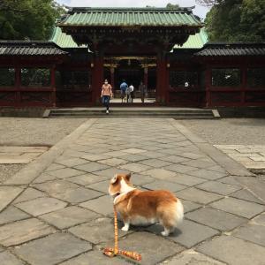 昼散歩 根津神社