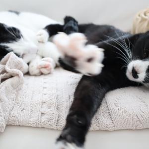 Amazonプライムデー購入品★猫用品&生活用品
