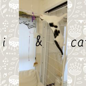 執着している猫じゃらしを取れない場所に吊るした時の猫の行動