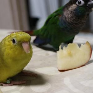 りんごパーティー