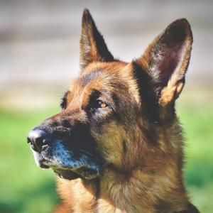 逃げた犬、国境を越える take custody of