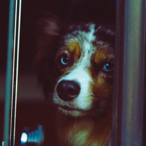 犬がバスで一人旅 lost property
