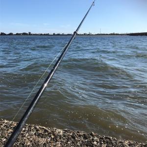 【釣り】クロダイ狙い|堤防うき釣りに挑戦!