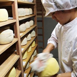 チーズを丸一年も熟成させる理由!苦みの原因も熟成にある!?