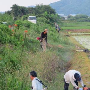 農村環境の維持に向けた共同作業を実施します。