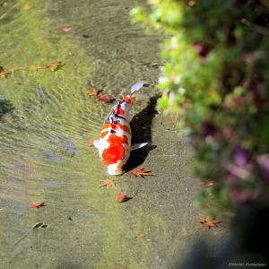 東京都庭園美術館日本庭園に行ってきました
