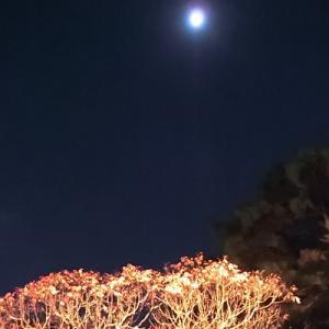 デートに打って付けの栗林公園ライトアップ