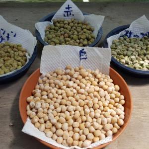 エンドウ豆採種