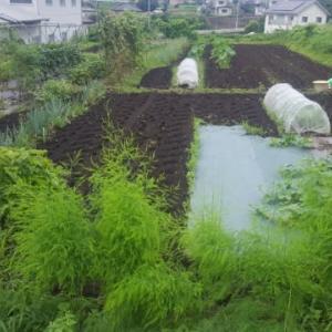 実家で、農作業