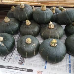 2回目の収穫「栗坊」