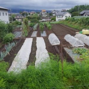 実家で、農作業してきました。