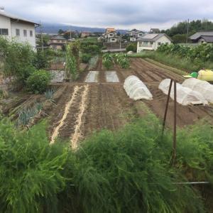 実家の農作業