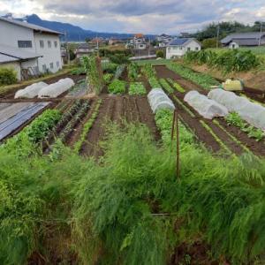 実家の畑で農作業