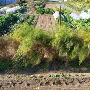 実家の畑で、農作業