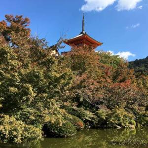 2020年 京都紅葉状況~建仁寺、下鴨神社、法観寺、清水寺(11/8更新)
