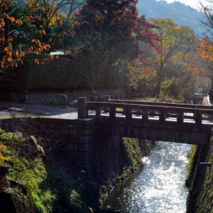 京都紅葉状況~哲学の道 2020年最新版11/18更新
