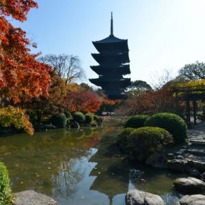 京都紅葉状況~東寺 2020年最新版 11/20更新