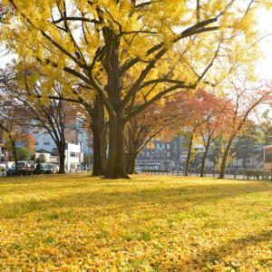 京都駅前 街中のオアシス