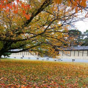 街中の紅葉スポット~京都御苑
