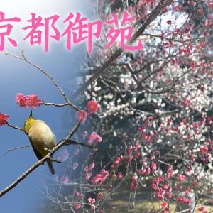 【2021年最新情報】京都御苑~梅が咲き始め