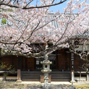 京都穴場の桜スポットめぐり