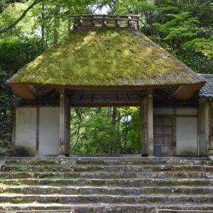 京都の隠れた名所【法然院】へ