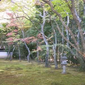 高 桐 院