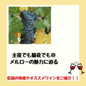 主役でも脇役でも◎な黒ブドウ品種               メルローの特徴と国ごとの違い・オススメワインを紹介