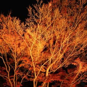 筑波山の紅葉ライトアップ