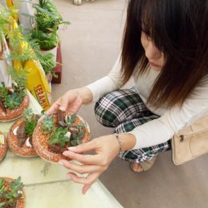 パキラは育てやすさで選ぶならベスト!新築に仲間入りした観葉植物の話