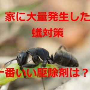 害虫対策【我が家の蟻を撲滅する方法を教えます】