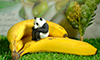 バナナが大活躍のガチャガチャ撮影