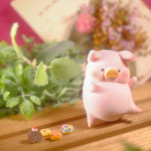 子豚のLuLuちゃんをお迎えしました!
