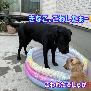 暑いぞプールだ‼︎     & 美しくなりたい