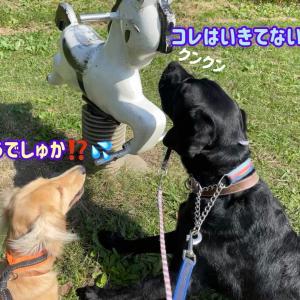 松伏記念公園へ & シーツ交換をしていると