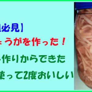 【海外組必見】紅しょうがを作った!梅干し作りからできた梅酢を使って2度おいしい