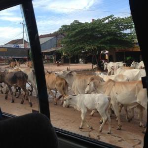 【謹賀新年】2021年中に、カンボジアへ行くことができたら良いのですが・・・