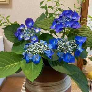 今日の玄関の花