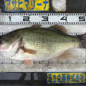 Mr.M 様(大阪府) 53.0cm/3200g